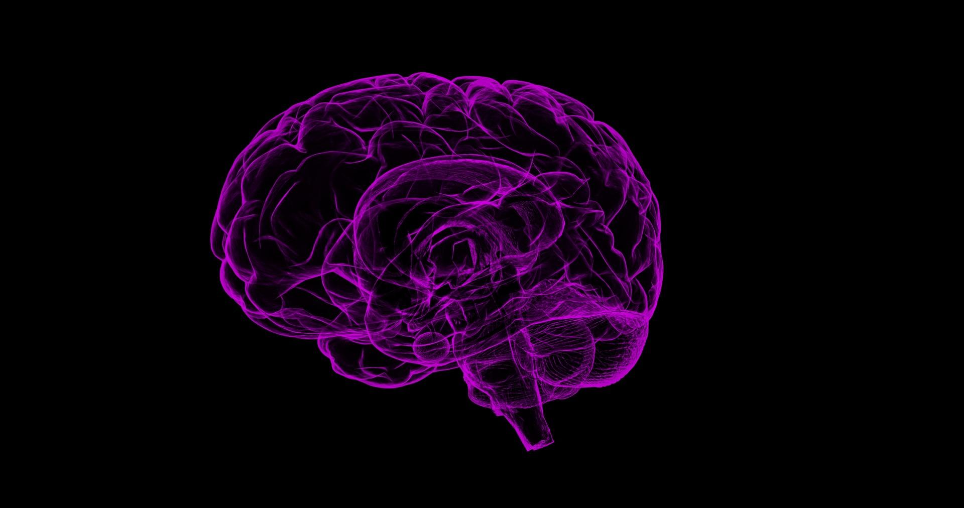 brain-1787622_1920