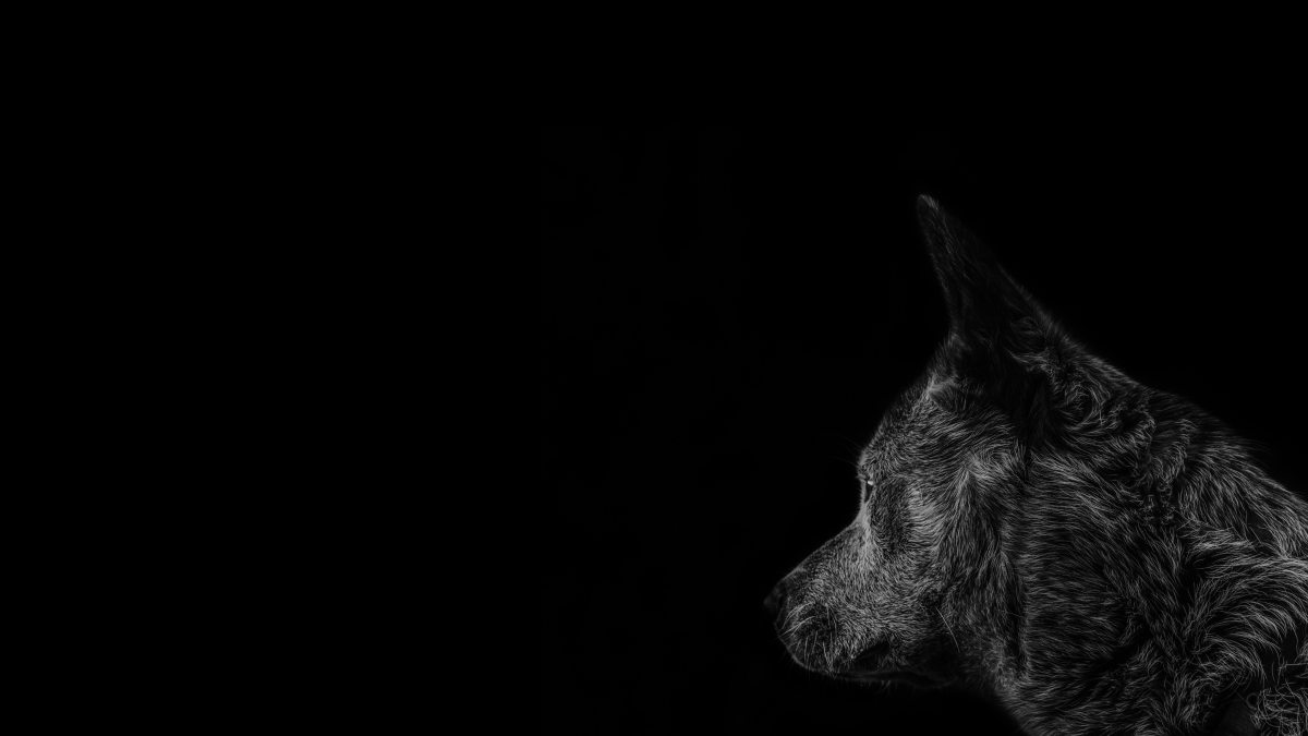 What IS The Black Dog of Depression?