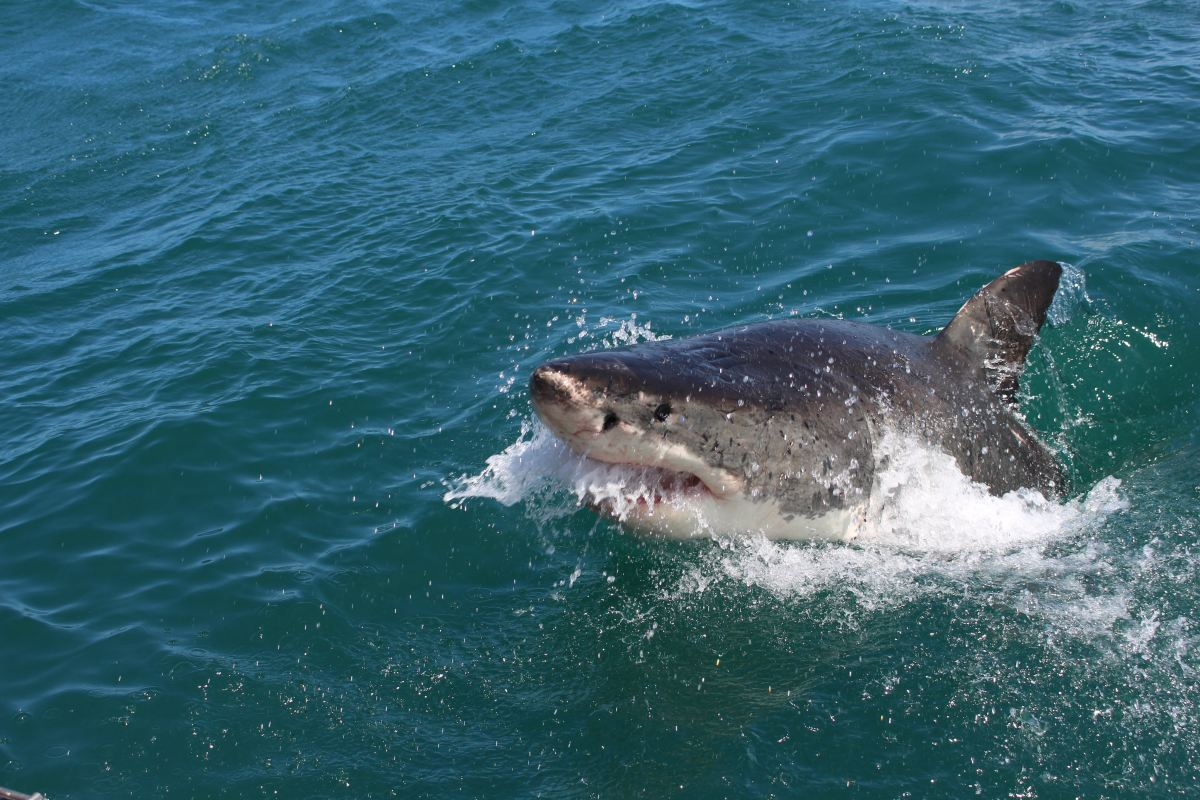 Living With Mental Illness is Like Swimming With A Great White Shark Lurking Nearby