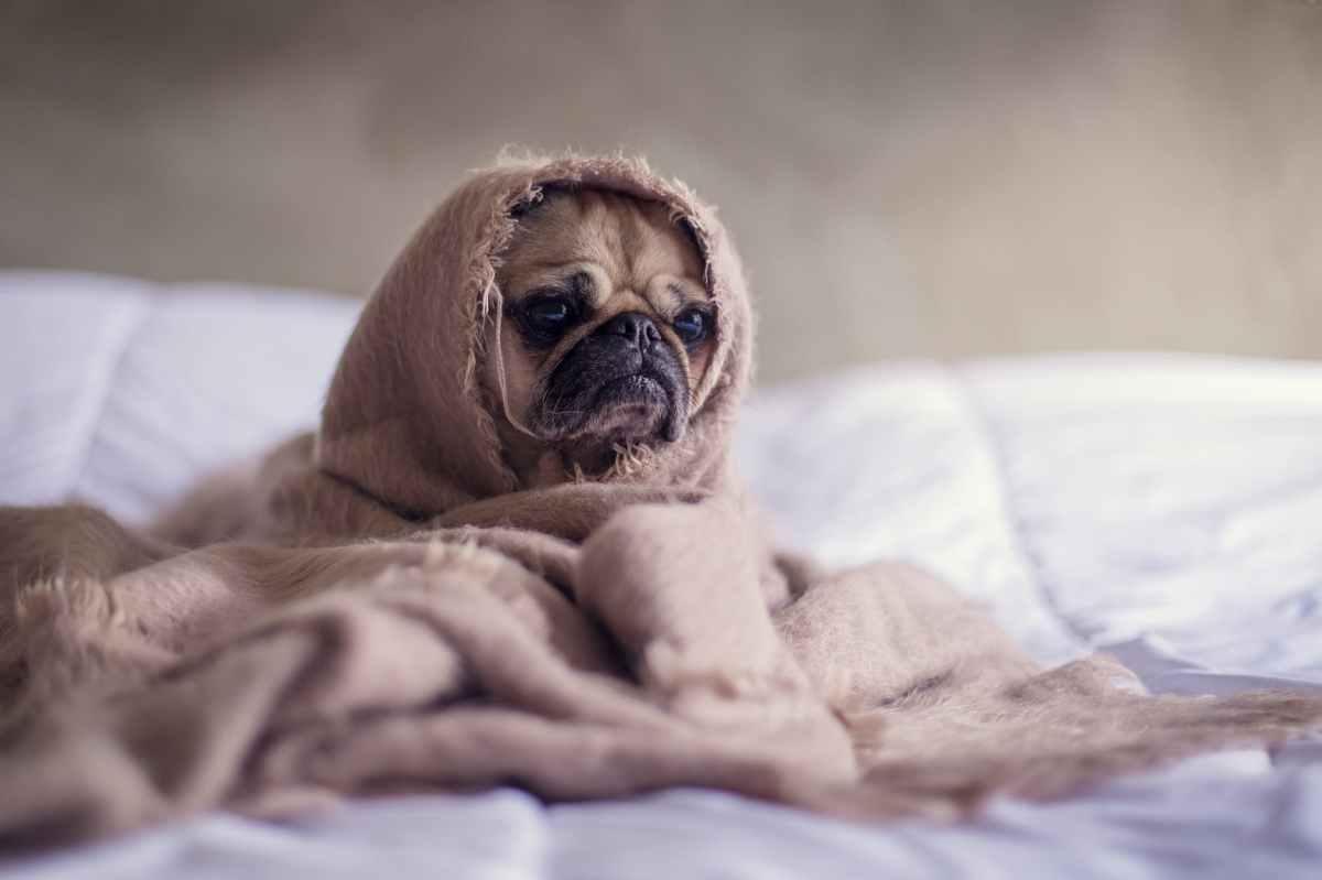 Babbles: Blanket Monsters